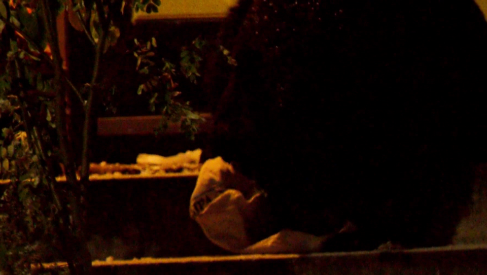 A black bear eating birdseed outside a home in the southwest Calgary neighbourhood of Lakeview