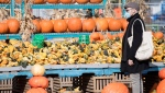 A man wears a face mask as shops for pumpkins in Montreal, Sunday, Oct. 18, 2020, as the COVID-19 pandemic continues in Canada and around the world. THE CANADIAN PRESS/Graham Hughes