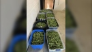 Marijuana seized by Essex County OPP. (Courtesy OPP)