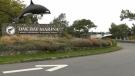 The Oak Bay Marina entrance on Oct. 19, 2020. (CTV News)