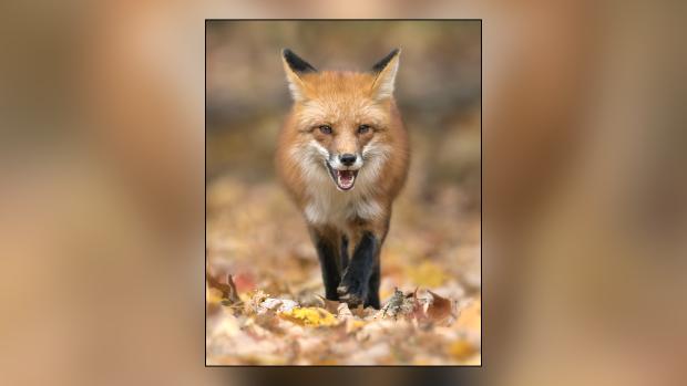 Pic of the Week: Wildlife