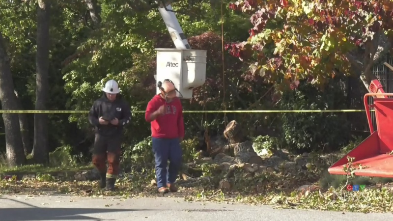 Death of tree-trimming worker shocks B.C. community