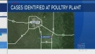 COVID case outbreak at Manitoba poultry plant