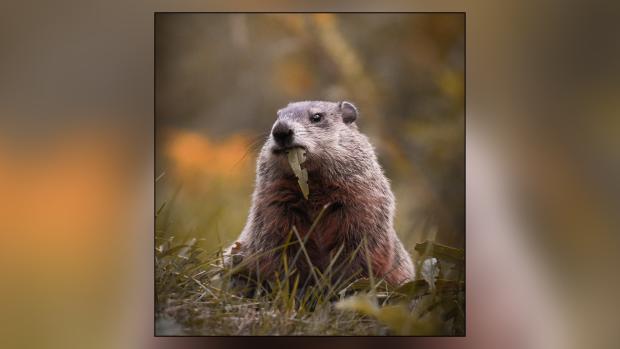 Picture This: Wildlife