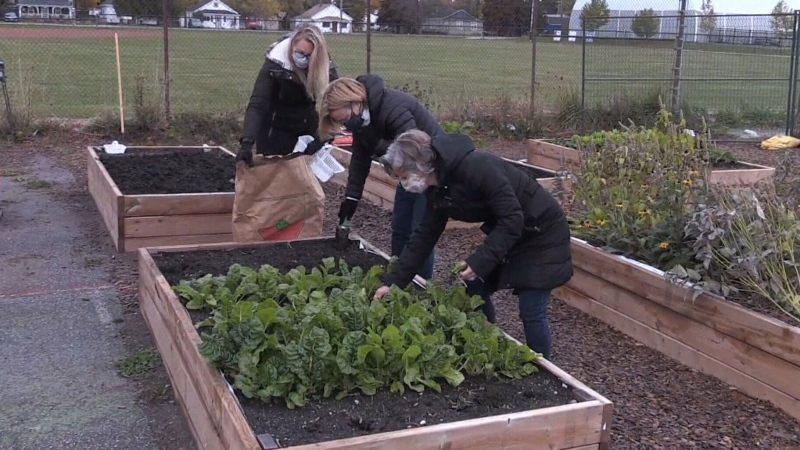 Collingwood community garden wraps up season
