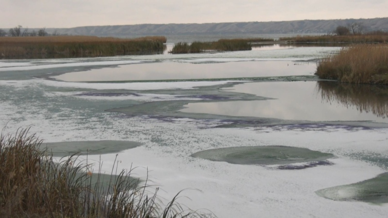 Build up of algae in Fort Qu'Appelle