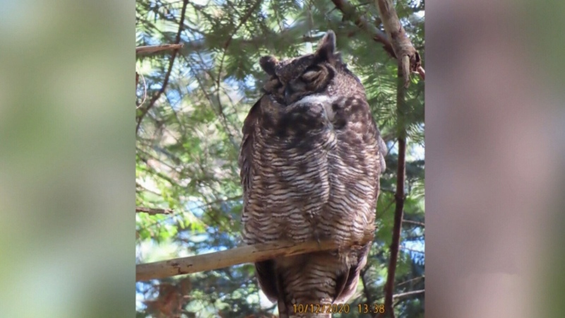 Community devastated after 'Ollie' the owl dies