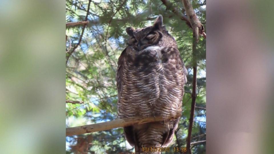 Community devastated after 'Ollie' the owl dies