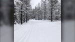 Greater Bragg Creek Trails Association's photo of  a cross-country ski trail (GBCTA)