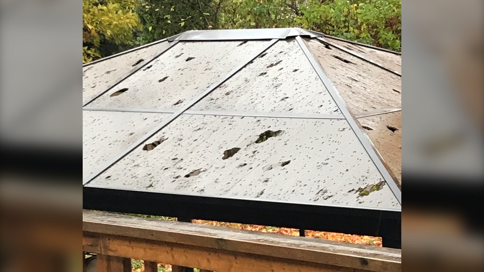 Hail caused damage in Midland, Ont., on Fri., Oct. 23, 2020 (Photo Cred: Kathryn Laliberte)
