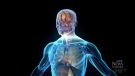 Cancer treatment discovers a new human organ