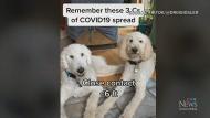 Using TikTok to spread COVID-19 data