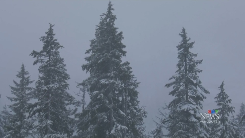 Early season snow hits South Coast