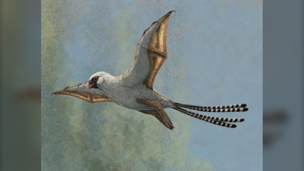 'Weird bat-winged' dinosaurs glided through treetops in attempt at flight: study