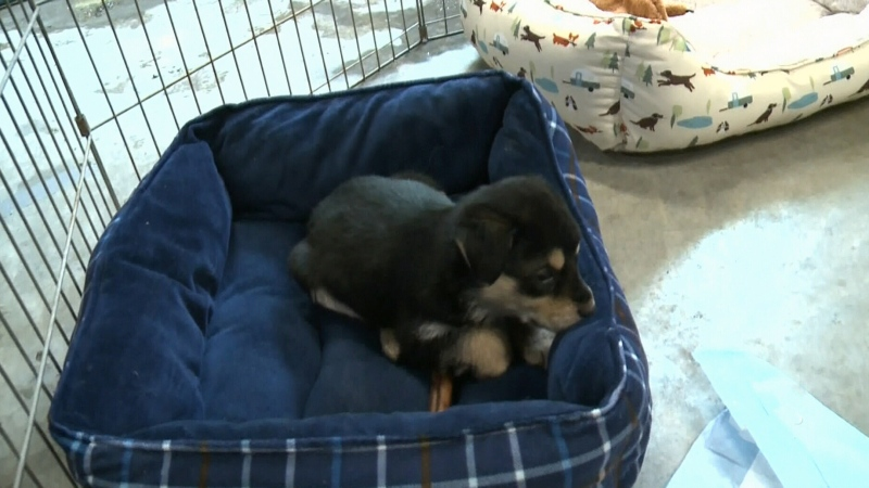 Local rescue helps vulnerable dogs