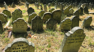 Surviving gravestones from Hyde Park Pet Cemetery. (E. Tourigny/The Royal Parks)