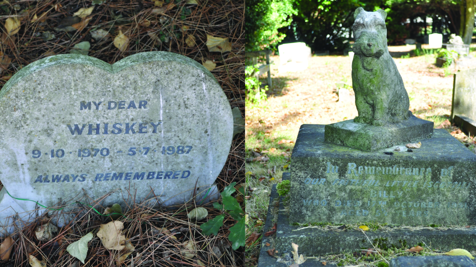 Examples of variation in gravestone design from the People's Dispensary for Sick Animals pet cemetery in Ilford. (Eric Tourigny/The Royal Parks)