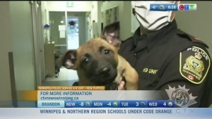 Pit Stop: Meet the new WPS K9 Unit puppies