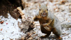 All the squirrels at Kildonan Park seemed to be frantically eating everything insight! Photo by Jennifer Raposo.