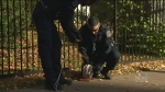 Police probe suspicious package at Public Gardens