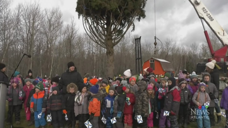 The Nova Scotia government says it still plans to send a tree to Boston this year, but they're still finalizing the details.