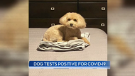A University of Guelph researcher identified the first dog with a confirmed case of COVID-19.