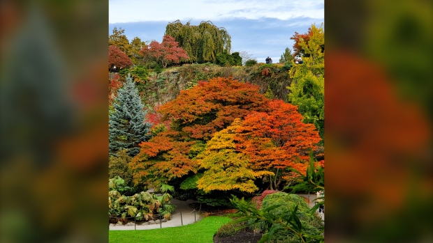 Queen Elizabeth Park is pictured in October 2020. (Jorgelina Zicarelli / submitted)