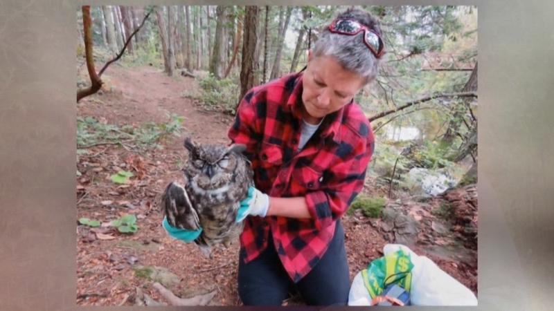 Owl advocates want rat poison banned after two owls were found dead in less than one week in one Vancouver Island neighbourhood. (Submitted)