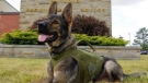 "OPP police dog ""Valor"""