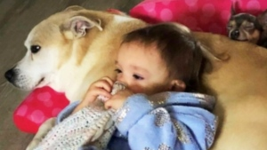 Ringo, a 12-year-old dog, is seen with one of Jessica Brandes' children.