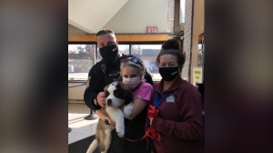 Benny the St. Bernard has been reunited with his owner (Twitter: Woodstock police)