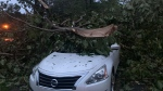 A toppled tree lays on top of a car in Talladega, Ala., on Thursday, Oct. 29, 2020, as Tropical Storm Zeta sped across the Southeast. (Cameron Keith via AP)