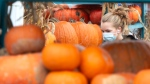 A woman shops for pumpkins at a market, Wednesday, October 28, 2020 in Montreal.THE CANADIAN PRESS/Ryan Remiorz