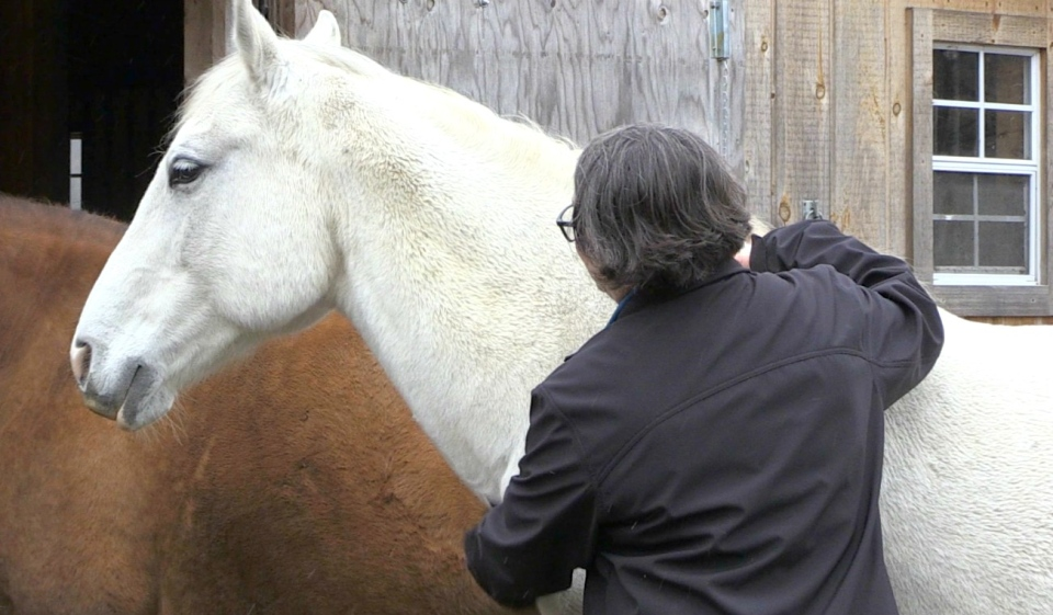 Ad Astra Stables in Corbeil has found a way to incorporate horses into healing for first responders in the area. (Alana Pickrell/CTV News)
