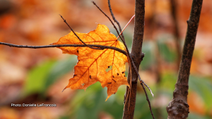 I think this leaf doesn't want to go! (Danielle LeFrancois/CTV Viewer)