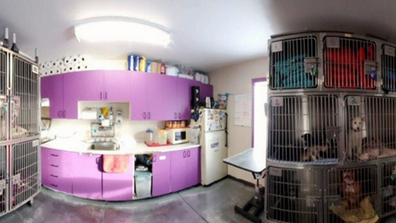 Iqaluit animal shelter