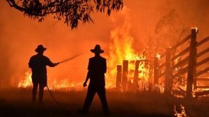 Australia's devastating 2019-2020 bushfires killed or displaced nearly three billion animals and cost the economy an estimated US$7 billion. (AFP)
