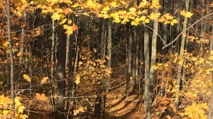 Oct. 30, 2020, was full of sunshine, and according to Environment Canada, November will be much the same. (KC Colby/CTV News)