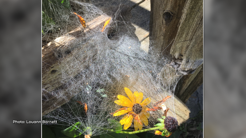 Spooky spider web - Happy Halloween! (Louann Barnett/CTV Viewer)