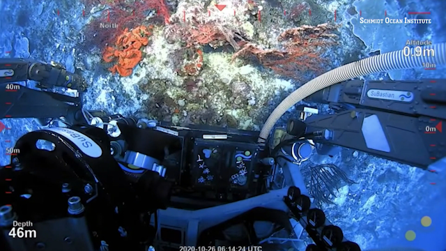 "A screenshot of video captured in Oct. 2020, by researchers from ocean research organization Schmidt Ocean Institute using their underwater robot ""SuBastian"" to explore a giant coral island discovered in the deep waters around Australia's Great Barrier Reef. (Credit: Schmidt Ocean Institute)"