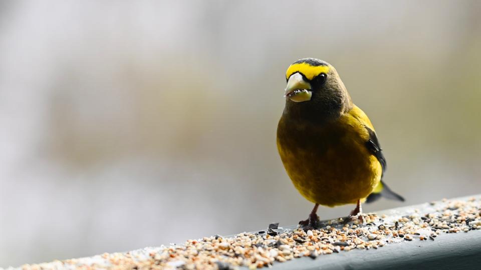 Birdwatching in Ottawa