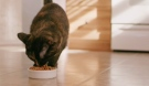 Help reduce allergies with new Purina formula