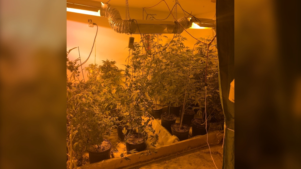 Ritchot marijuana grow op RCMP