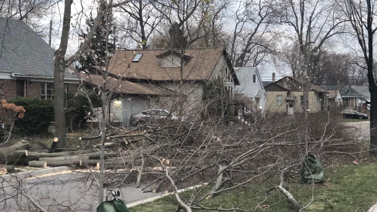 Downed trees lay across a Riverside street in Windsor, Ont., on Sunday, Nov. 15, 2020. (Submitted to CTV Windsor)