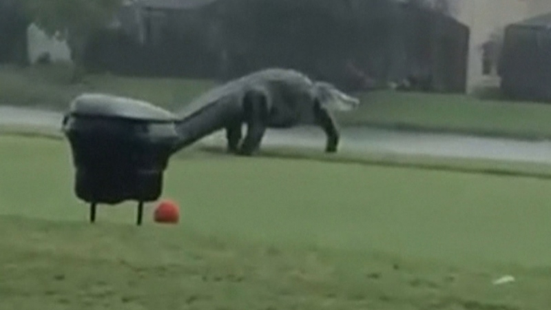 Massive alligator spotted at Florida golf course