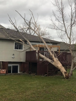 High winds knocked down power lines and trees in Windsor-Essex. (Submitted to CTV Windsor)