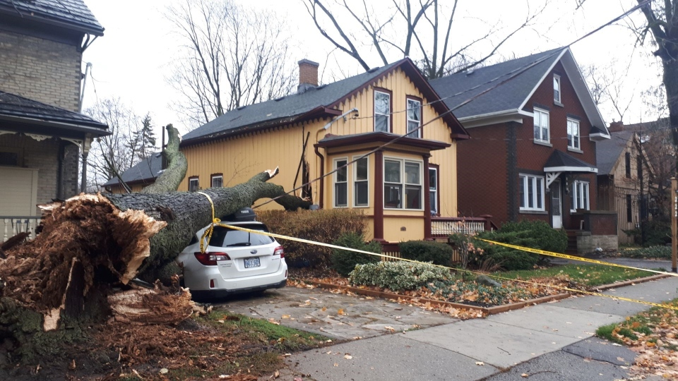 A tree crashed into a car in Waterloo during a wind storm