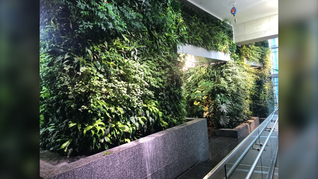 Living wall inside Edmonton's Federal Building