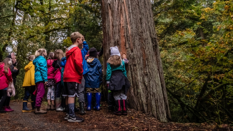 A school group connects with an ancient cedar during a Sierra Club BC nature education program in Goldstream Provincial Park. (Mya Van Woudenberg-Sierra Club BC)