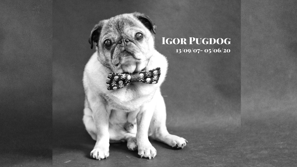 Igor Pugdog, who passed away on June 5, 2020 (Source: Tracey Silverthorn)